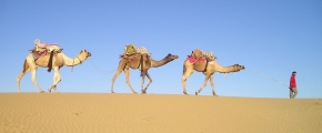 8D6N COLORFUL RAJASTHAN WITH UNIQUE LODGING (PRIVATE TOUR)