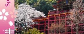 Spring Story In Onsen Island Kyushu Japan 8D6N