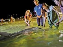 7D5N Inspiring Gold Coast with Dolphins Experience