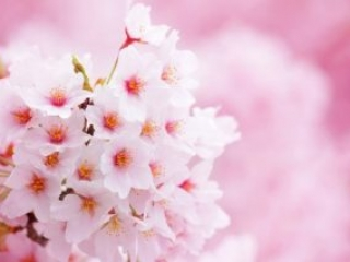 7D6N / 7D5N Sakura Delight ~Tokyo to Osaka~ (27 Mar / 29 Mar)