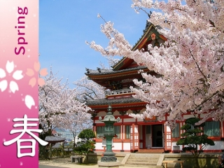 Spring Rhythm in Shikoku with Setouchi Japan 9D7N