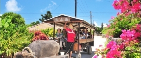 7D6N Okinawa Island Hopping Free & Easy Plus