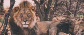 7 Days Adventure Safari