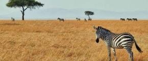 9 Days Kenya Cultural Safari
