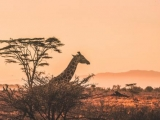 10 Days Must See Safari