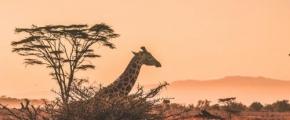 Must See Safari