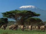 6 Days Kenyan Adventure