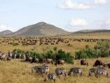 8 Days Classic Kenya