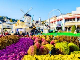 8D Iconic Korea ~Cherry Blossom
