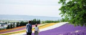 7D5N Hokkaido Purple Romance
