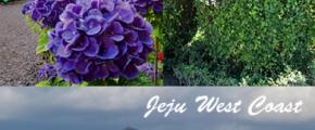 Classic Western Jeju 1-Day Tour