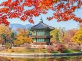8D Korea Splendour Autumn & Jeju Island