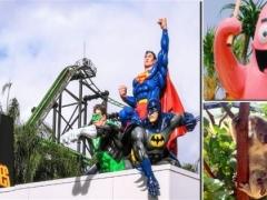 5D Gold Coast Theme Park Delight