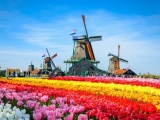 10D8N INSIGHTS OF NETHERLANDS
