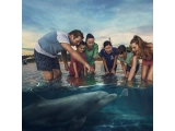 7D5N GOLD COAST WITH DOLPHIN EXPERIENCE