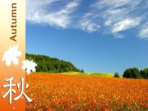 Fabulous Hokkaido 9D6N