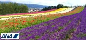 7 Days Hokkaido Floral Delights