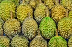Yong Peng 1D Durian Tour