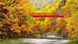 6D5N Autumn Central Japan Self Drive