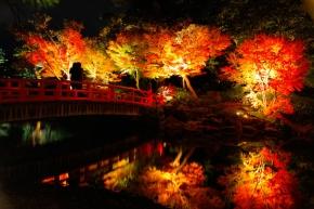 7D6N Autumn Osaka + Tottori Self Drive