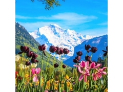 10D7N SWITZERLAND AT LEISURE
