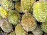 2D1N Melaka & Durian