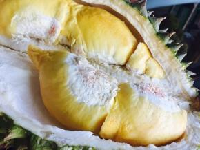 1D Batam Durian Tour (Weekend Departures)