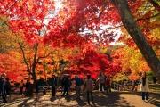 7D6N Autumn Tohoku Self-drive
