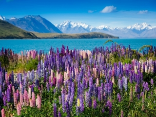 10D Highlights Of New Zealand + Fiji