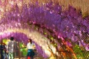 8D6N NORTHERN KYUSHU FLOWER WORLD
