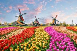 9D6N Tulip Netherlands & Belgium