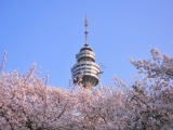 7D6N GRANDEUR OF KOREA(CHERRY BLOSSOM)