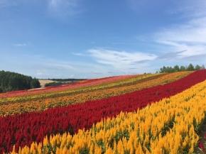 7D5N Delightful Hokkaido
