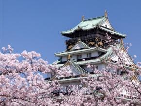 5D4N Osaka Sakura F&E Plus