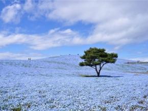 5D4N Tokyo Spring Flower F&E Plus