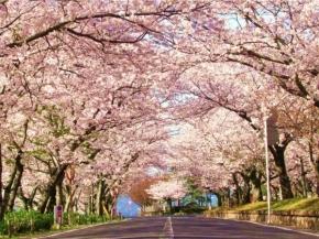 7D6N Kyushu Self-Drive (Sakura Ver)