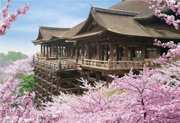 7D6N Osaka + Tottori Self-Drive (Sakura Ver)