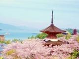 7D6N Seto Inland Sea Self-Drive (Sakura Ver)