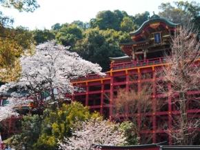 8D6N Spring Breeze in Kyushu