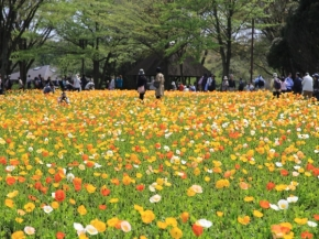 9D6N Spring Highlight in Central Japan with Sado Island