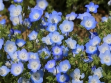9D6N Floral Fantasia in Chugoku & San'in Japan