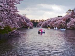 7/8D Beautiful Shiragawa-go Sakura Special