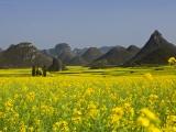 8D Southeast Yunnan/Kunming/Dali/Li Jiang/Shangri-la Floral Tour