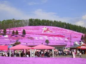 7D5N HOKKAIDO SHIBAZAKURA + TULIP AFFORDABLE TOUR