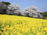 8D SPRING IN KYUSHU AFFORDABLE TOUR