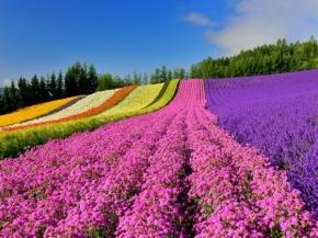 10D8N Hokkaido Floral Delights Group Tour