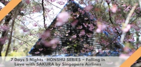 7 Days 5 Nights   HONSHU SERIES ~ Falling in Love with SAKURA by Singapore Airlines
