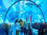 1D LEGOLAND Theme Park & Sealife + 1 Day Water Park
