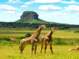 10D7N HIGHLIGHTS OF SOUTH AFRICA (APR - OCT)