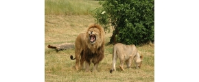 10D 8N EXPERIENCE SOUTH AFRICA